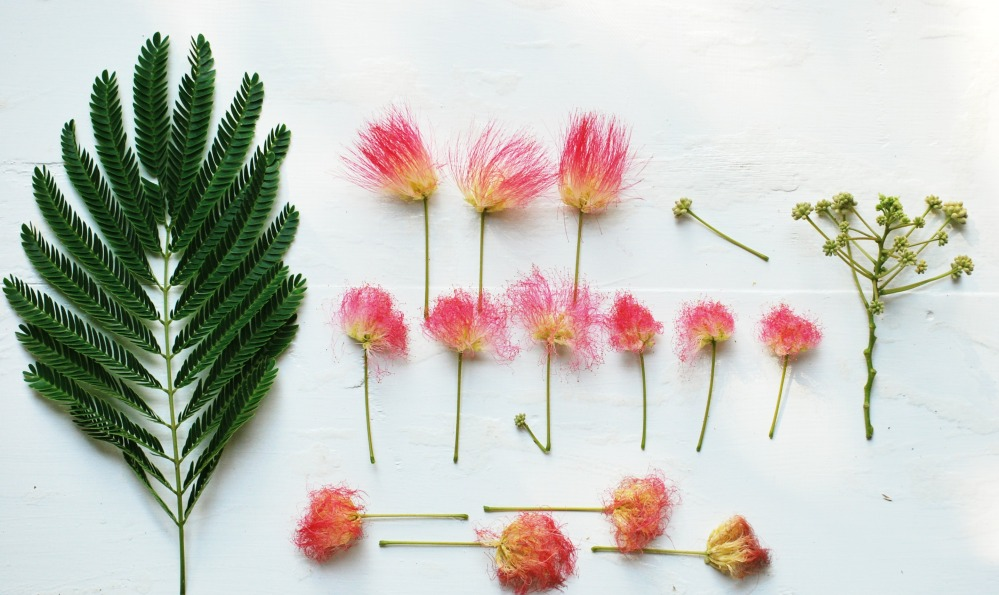 mimosa parts